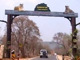 Video : Drought In Tiger Reserve: How Bandipur In Karnataka Is Coping