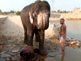 Video : Documentary: Where The Elephant Sleeps