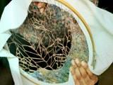 Video: Rediscovering Art Through Textiles