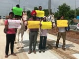 Video : To Protest Bad Roads, Hyderabad Techies Rode Horses To Work