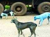 Video: सोशल मीडिया में वायरल हो रहा है नीला कुत्ता