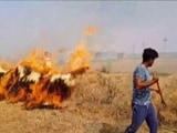 Video : When Punjab's Farmers Openly Defied Stubble Burning Ban By Green Court