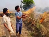 Video : 'Have No Choice': Farmers Openly Defy Court Order On Stubble Burning