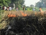 Video : बड़ी खबर : ओडिशा में धान पर लगने वाले कीड़े से किसान परेशान