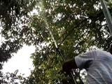 दिल्ली में प्रदूषण, एनडीएमसी ने शुरू किया पेड़ों पर पानी का छिड़काव