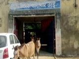 Video : Donkeys Jailed For 4 Days In Uttar Pradesh. Crime? Ate Expensive Plants