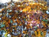 Video : जीवाजी विश्व विद्यालय की पहल : दो मंदिरों ने फूल नदी में डालने बंद किए