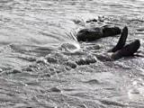 Video : ब्रह्मपुत्र नदी का पानी गंदा और काला क्यों?