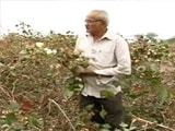 Video : A Patel Farmer On What Went Wrong For The BJP In Gujarat's Saurashtra