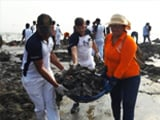 Video : Versova Beach Clean-up Goes Big Yet Again, Here's How