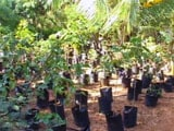 Video : Organic Farmers Rue Lack Of Labour, Neglect, Corruption In Sector