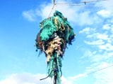 Video: Great Pacific Garbage Patch Is Now Three Times The Size Of France