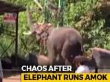 Video : 12 Injured At Kerala's Sabarimala Temple After Elephant Carrying Priest Atop Runs Amok