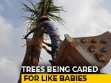 Video: A Telangana 'Hospital' That Gives Dying Trees A Second Life