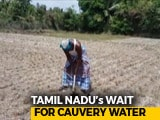 Video : Amid Cauvery Row, Farmers In Parched Tamil Nadu Are Worried About Future